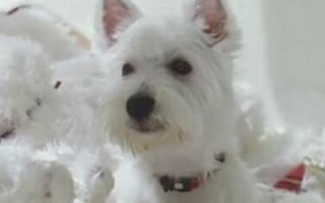 《我的狗狗我的爱》30秒预告片